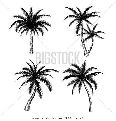 Hand drawn palm trees isolated on white background. Vector holiday palm tree sketch set for summer fashion design