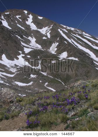Mountain View With Wildflowers