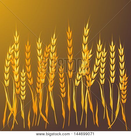 Field of wheat barley or rye vector visual golden background. Summer landscape growth seed field of wheat ideal for bread packaging beer labels. Agriculture nature farm cereal field of wheat.