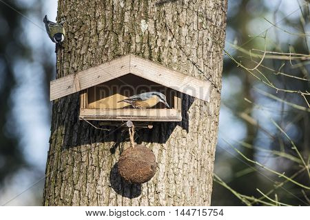 A bird table with a nuthatch in autumn