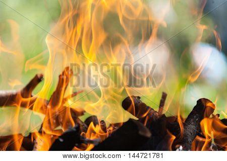 Bonfire in the forest. Bonfire in the forest.