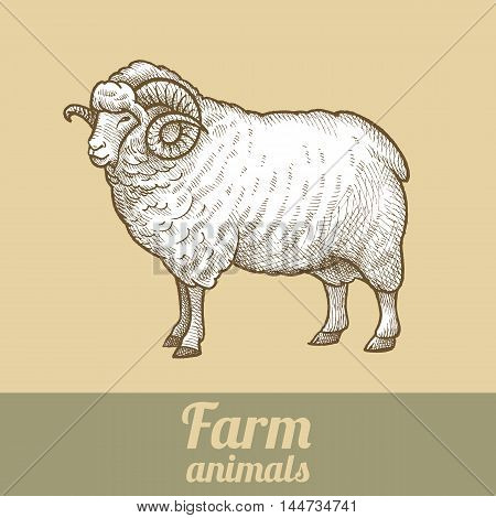 Cattle ram. Series vector illustration of farm animals. Style vintage engraving.