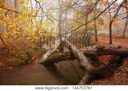 river and colorful trees in Autumn season, at Geres, Portugal