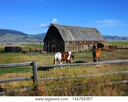 Rustic wooden barnsits inside a wooden padock. Horses slowly plod toward barn and their daily alotment of hay. Blue Montana sky frames agricultural scene.