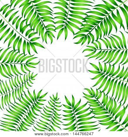 Floral background. Summer leaves flourish border. Plam leafe frame vector illustration