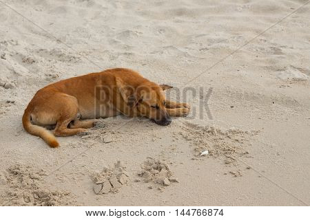 Dog Sleeping on beach relaxing the sand at the seaside in summer holiday poster