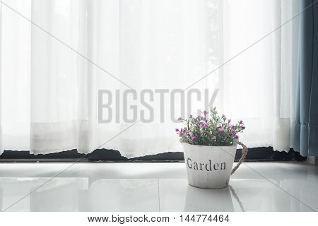 beautiful purple flower on flower pot with white drape background and morning sunlight.