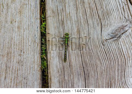 Large Green Dragonfly On A Wooden Background