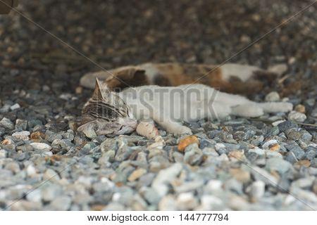 little newborn cat sleep, close up image