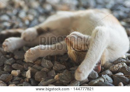 cute little cat sleep on the ground