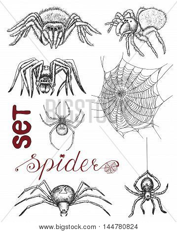 Hand drawn set with scary spiders and cobweb isolated. Doodle line art illustration and graphic sketch, black and white vector with icons, tarantula and black widow, halloween collection