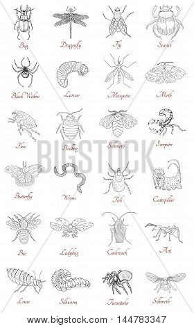 Big collection with various hand drawn insects isolated on white. Doodle line art illustration and graphic sketch, black and white vector with icons and lettering, vintage animals set