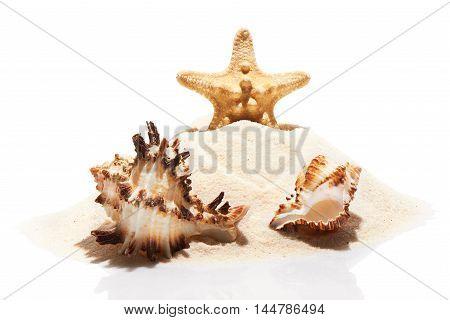 Starfish And Couple Of Sea Shells On Pile Of Beach Sand