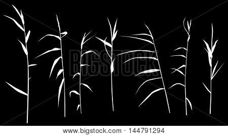 illustration with set of reed silhouettes isolated on black background