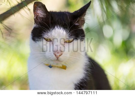 Cat in the green grass