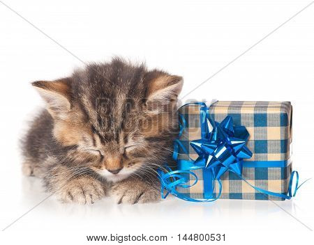 Asleep cute kitten with gift-box on a white background