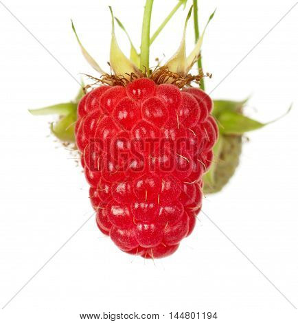 Ripe raspberry on a branch isolated on white background