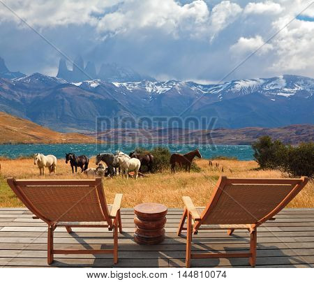 Herd of mustangs graze near the lake Laguna Azul. Two comfortable wooden deck chairs are next