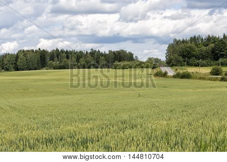 Whet field in the Finnish countryside at summer