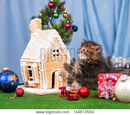 Cute siberian kitten near gingerbread lodge with Christmas gifts and toys over blue background