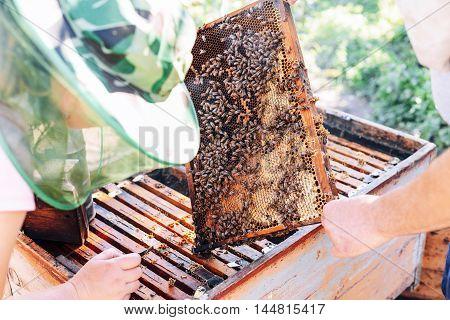 Frames Of A Bee Hive. Beekeeper Harvesting Honey. The Bee Smoker