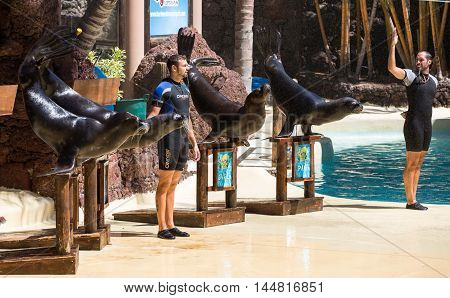 LA LAJITA FUERTEVENTURA SPAIN - SEPTEMBER 11 2015: Shows sea lions in the pool Oasis Park Fuerteventura Canary Island Spain