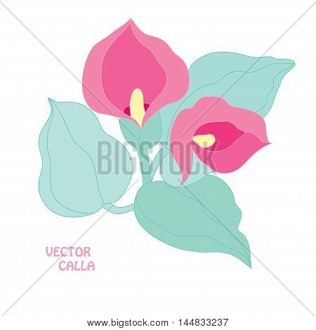 Elegant hand drawn calla flowers design elements. Can be used for wedding baby shower mothers day valentines day cards invitations banners posters scrapbooking elements gift paper ornament