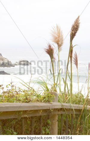Walking Path Along Coastline