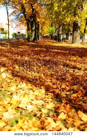 Beautiful autumn park. beautiful autumn ocre leaves