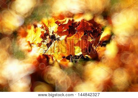 Red and Orange Autumn Leaves, color background and blur effect at the edges