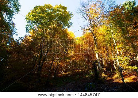 Forest road in the autumn, beautiful color autumn foresr