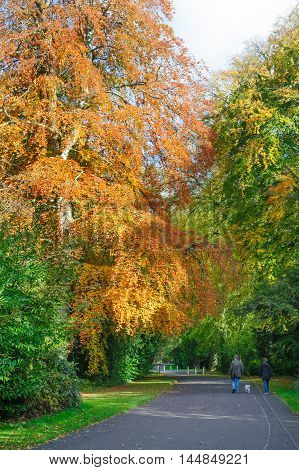 Couple walking with dog in Beautiful autumn park