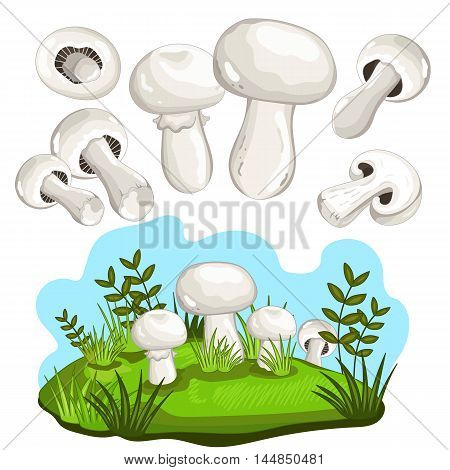Champignon mushroom set. Mushroom isolated on white background. Vector mushroom and forest mushroom set. Different mushroom size. Half mushroom and small mushroom collection. Vegetarian food. Raw mushroom. Autumn mushroom Cartoon mushroom illustration.