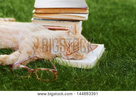Cute cat with book and glasses sleeping on green grass, funny pet. Reading and education concept.