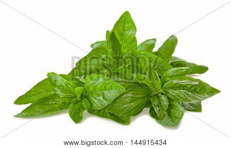 basil bunch isolated on a white background