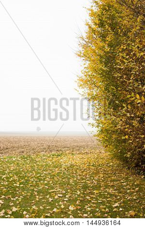 landscape in autumn with two trees and grass