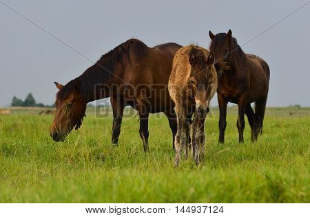 Mother horse and her baby colt in the green field