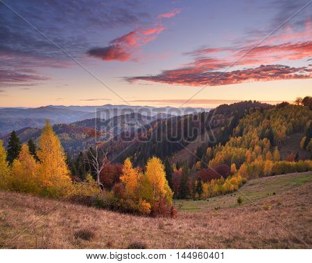 Autumn landscape at sunrise in the mountains. Beautiful forest on the hillside. Carpathians, Ukraine, Europe