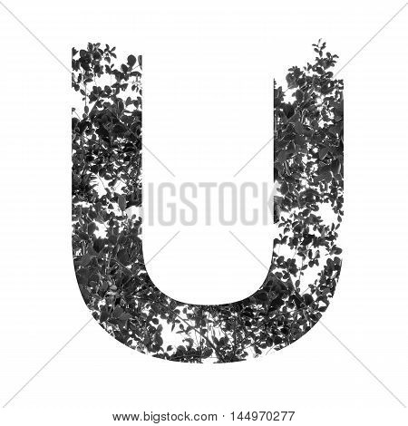 U Letter Double Exposure With Black And White Leaves Isolated On White Background,clipping Path