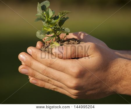plant in hands grass background blur background