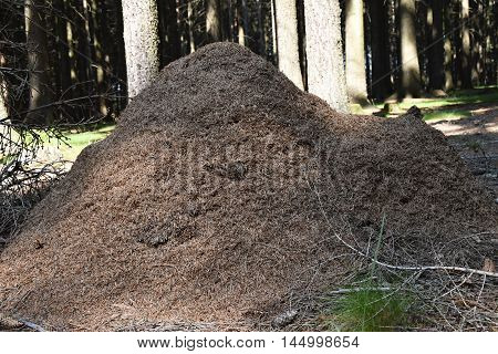 Large anthill in a forest trees in the background