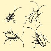 Cockroach On Hand Drawn Sketch Note Original Illustration poster