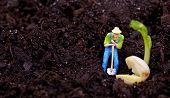 Miniature gardener  working poster