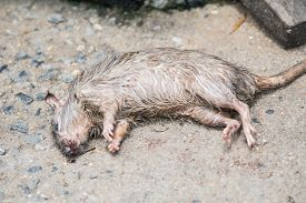 The Dead rats on floor. I was poisoned