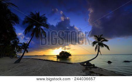 Sun Kissed: Sunrise Over The Atlantic Ocean With Swaying Palm Trees In Islamorada, Florida Keys