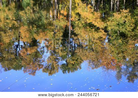 autumn trees reflected in the pond. St.Petersburg