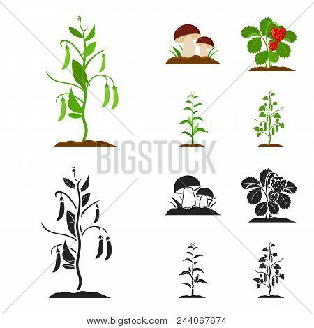 Mushrooms, Strawberries, Corn, Cucumber.plant Set Collection Icons In Cartoon, Black Style Vector Sy
