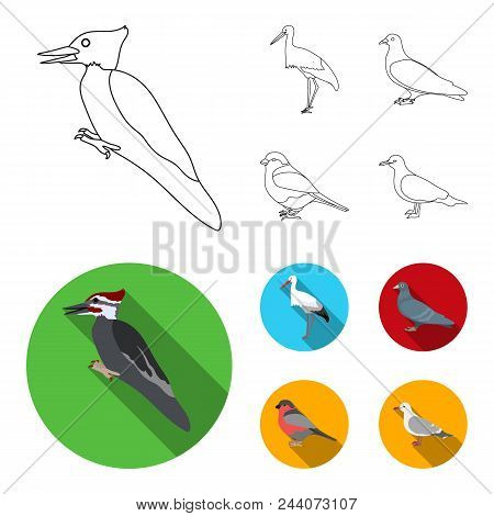 Woodpecker, Stork And Others. Birds Set Collection Icons In Outline, Flat Style Vector Symbol Stock