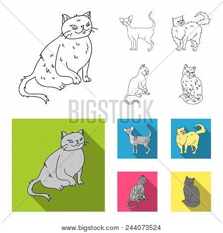 Persian, Cornish Rex And Other Species. Cat Breeds Set Collection Icons In Outline, Flat Style Vecto