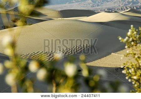 Dunes Behind The Plant